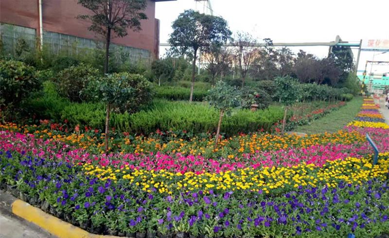 【美丽汉钢】春暖花开季  护绿增绿正当时 ——永利电玩城网站打响春季绿化美化攻坚战