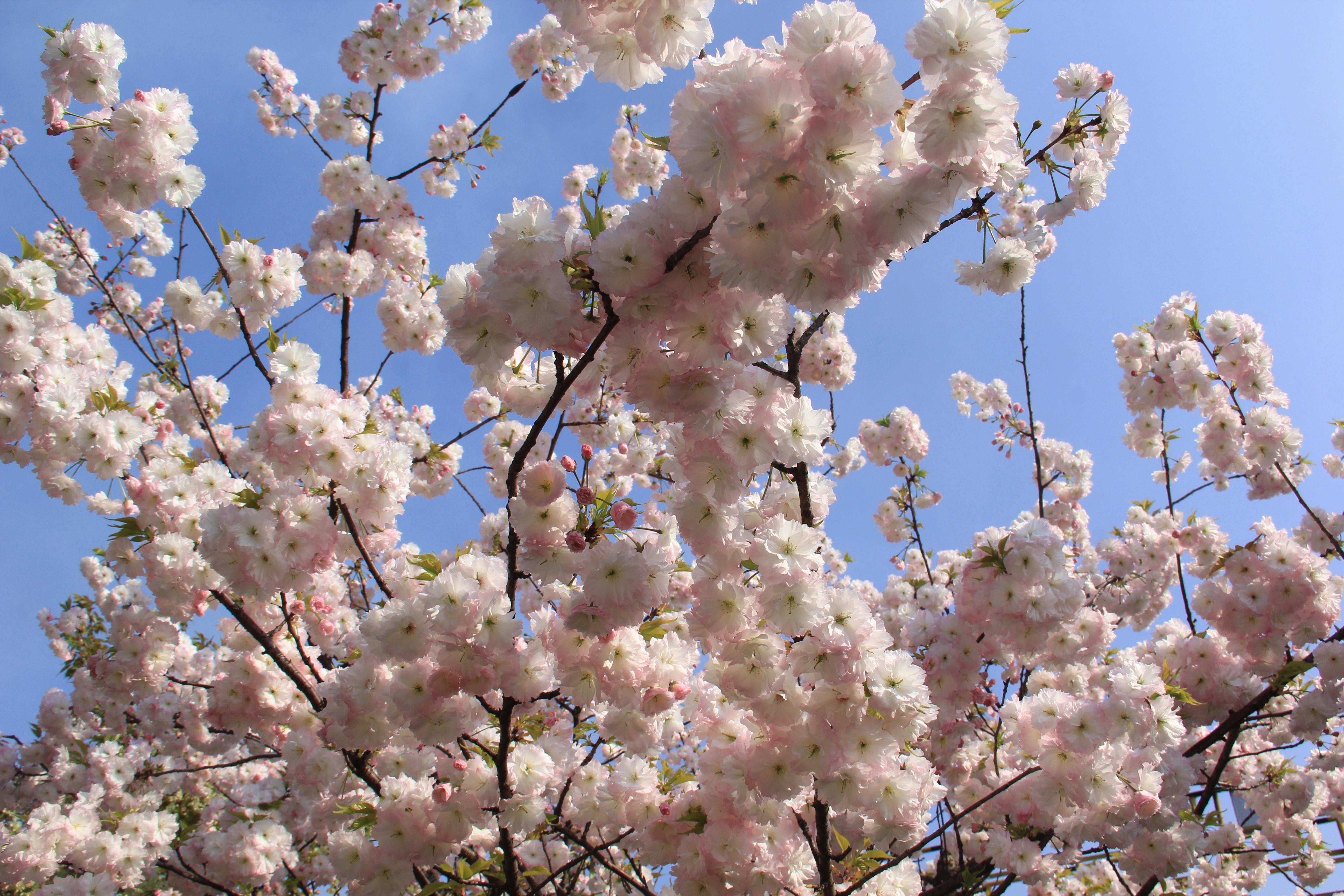 【美丽汉钢】美翻了,一起到汉钢踏春观花吧!