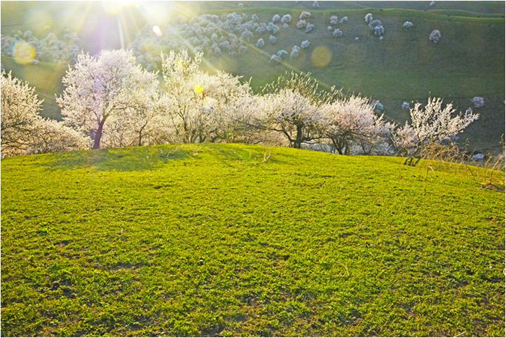 【钢城文苑】感受春天的气息